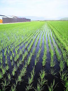 イカ墨農法の風景